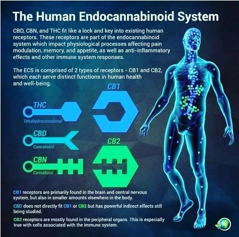 ECS-system